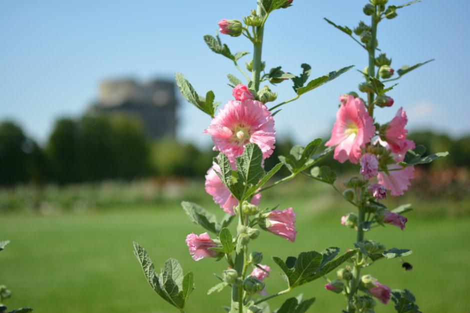 vienna-augarten-blooming-flowers_940x627
