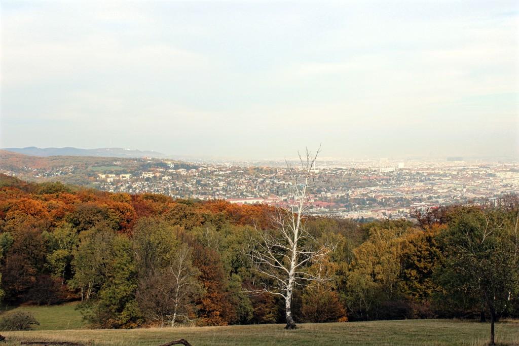 Wiener Blick_Lainzer Tiergarten_3