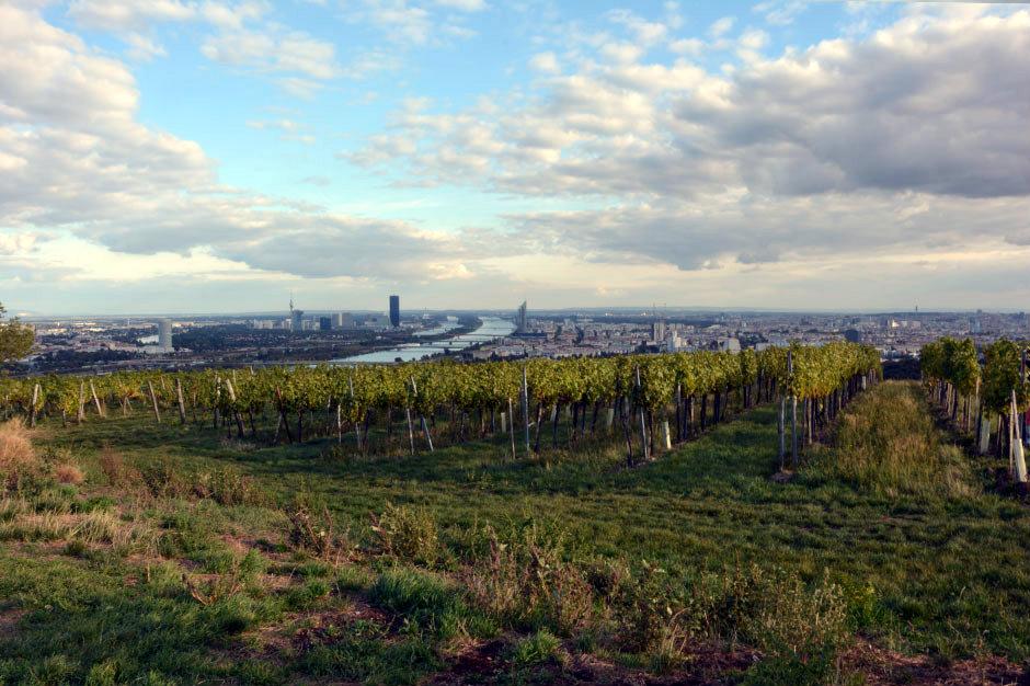 vienna-view-vineyards_940x626