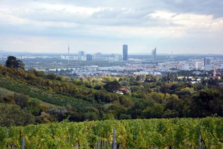 vienna-vineyard-view_940x626