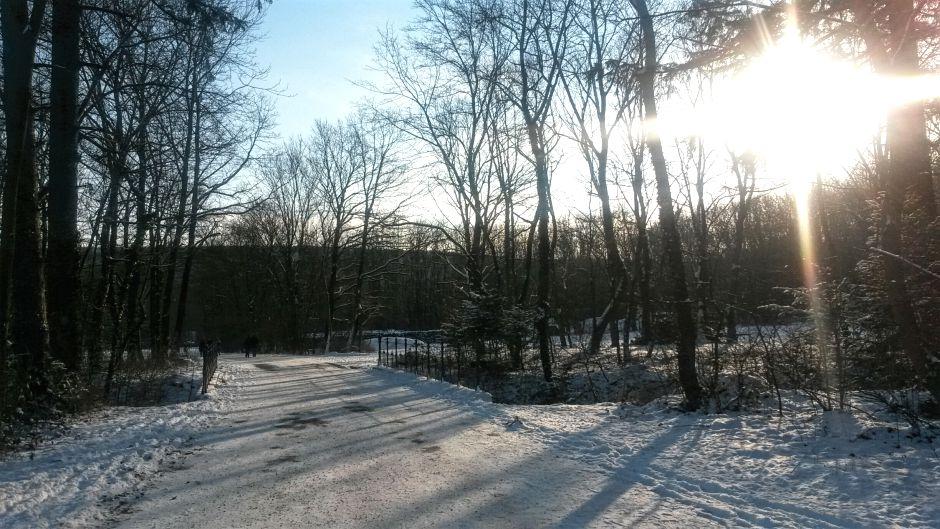 Winterspaziergang-Walk-Winterwonderland-Lainzer-Tiergarten_940x529